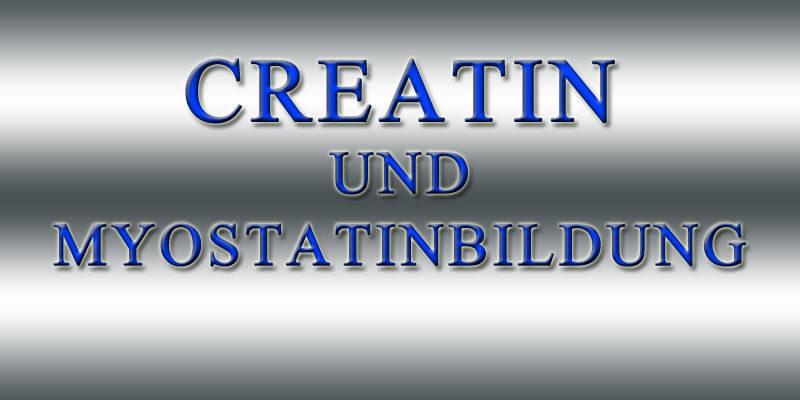 CREATIN-UND-MYOSTATINBILDUNG