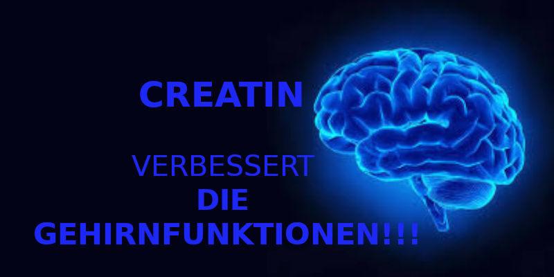 CREATIN VERBESSERT DIE GEHIRNFUNKTIONEN